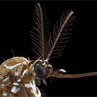 Giải mã cách muỗi tìm đốt con người