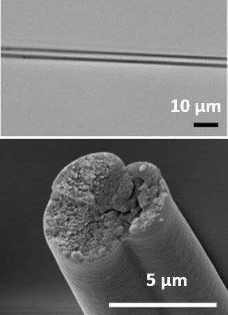 Mặt cắt ngang của gene vi khuẩn có khả năng tạo ra tơ nhện.