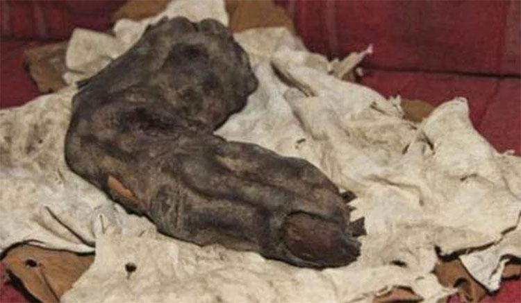 Ngón tay dài 38cm thuộc về một cá thể cao khoảng 5m và nặng từ 600 - 800kg.