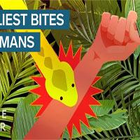 Động vật có nọc độc gây chết người nhanh nhất thế giới