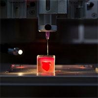 In thành công tim 3D đầu tiên trên thế giới nhờ sử dụng mô tế bào