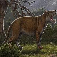 Phát hiện hóa thạch 22 triệu năm của thú săn mồi cổ đại