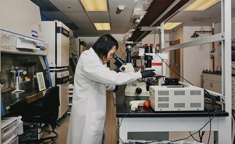 Wenning Qin, Giám đốc Kỹ thuật gene ở công ty khởi nghiệp eGenesis,