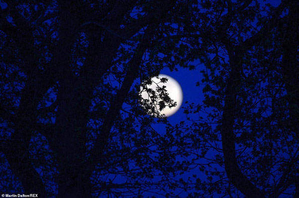 Mặt trăng hồng, hình trên vùng đất nông nghiệp ở Essex