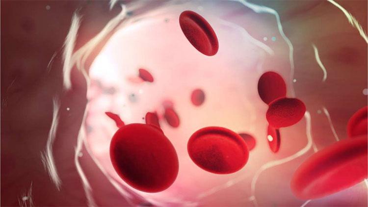 Nhóm máu O có khả năng bảo vệ cơ thể tốt hơn trước virus sốt rét.