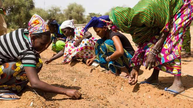 Người dân châu Phi trồng cây, thực hiện dự án bức tường xanh vĩ đại.