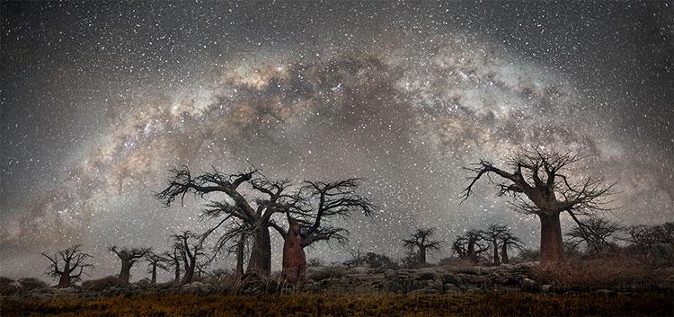 Những cây bao báp ở Namibia