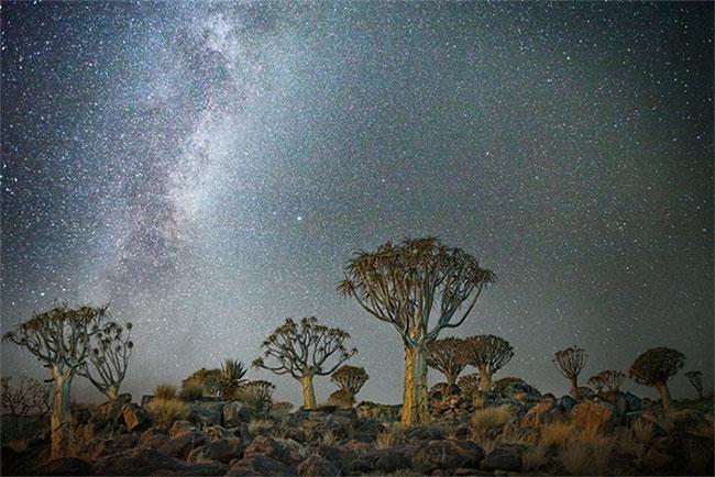 Những cây quiver dưới trời đêm ở Keetmanshoop, Namibia