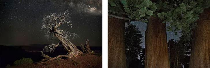 Bên trái là một cây juniper khác ở công viên Dead Horse Point (Mỹ). Bên phải những cây củ tùng lâu năm ở công viên quốc gia Sequoia