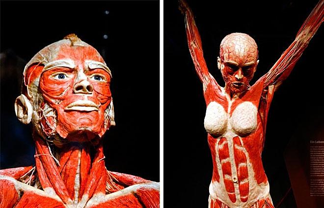 Cơ thể con người có hơn 600 cơ, đủ nâng vật nặng hàng ngàn tấn.