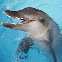 Hình ảnh đau lòng: Cá heo con mắc cạn ở Florida chứa đầy rác thải nhựa trong bụng