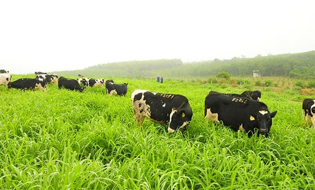 Dù cỏ là một nguồn thực phẩm dồi dào, nhưng con người vẫn không thể xơi món thực vật này.