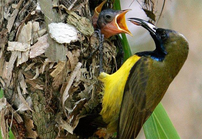 Chim ăn ong