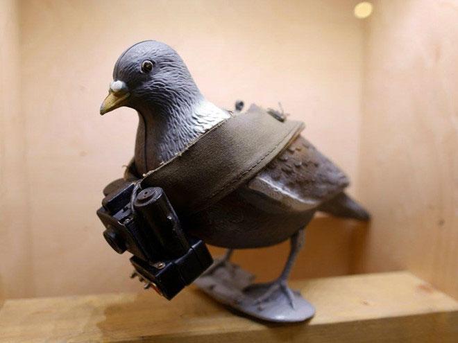Bồ câu được sử dụng vào mục đích truyền tin quân sự từ xa xưa.