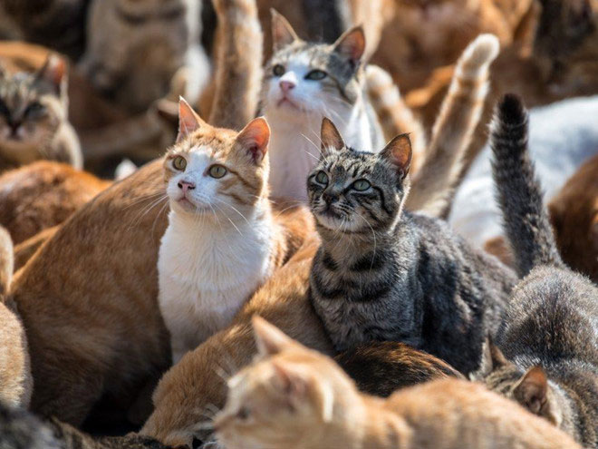 CIA đã chi khoảng 10 triệu USD để phẫu thuật mèo, biến chúng trở thành thiết bị ghi âm di động