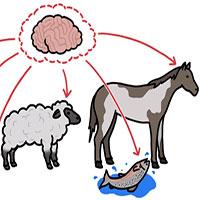 Lý do vật nuôi thường có não bị thu nhỏ