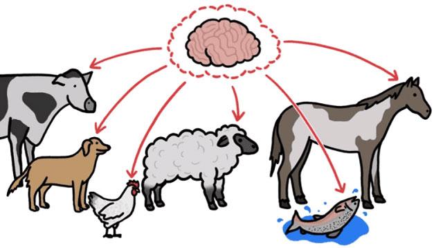 Kích thước não và kích thước cơ thể động vật liên quan chặt chẽ với nhau.