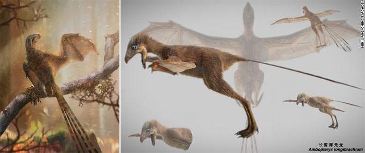Phác họa chi tiết về loài khủng long Ambopteryx