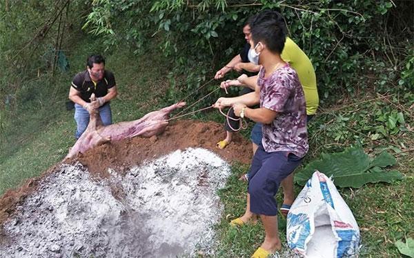 Cần chôn lấp đúng quy cách khi tiến hành chôn lợn.