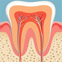 Các nhà khoa học đã tìm ra cách giúp bạn mọc lại răng mới chỉ sau 2 tháng