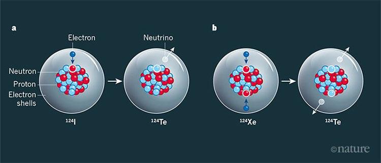 Bắt electron và bắt kép electron kép giải phóng hai neutrino.