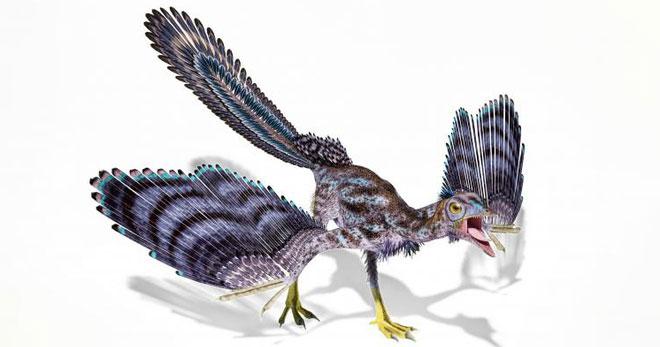 Alcmonavis poeschli được xem là khủng long bay giống chim nhất.