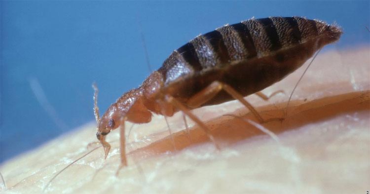 Loài rệp đã xuất hiện từ rất sớm trên Trái Đất và tiến hoá cho đến ngày nay.