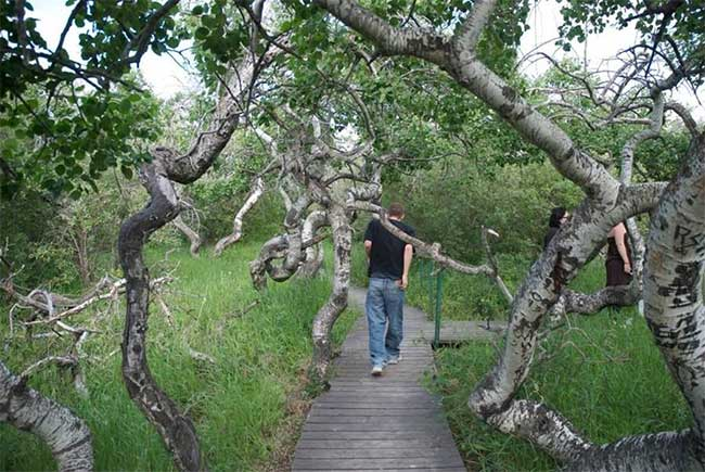 Người ta tạo lối đi ở giữa vườn để bảo tồn giống cây lạ và thu hút khách du lịch.
