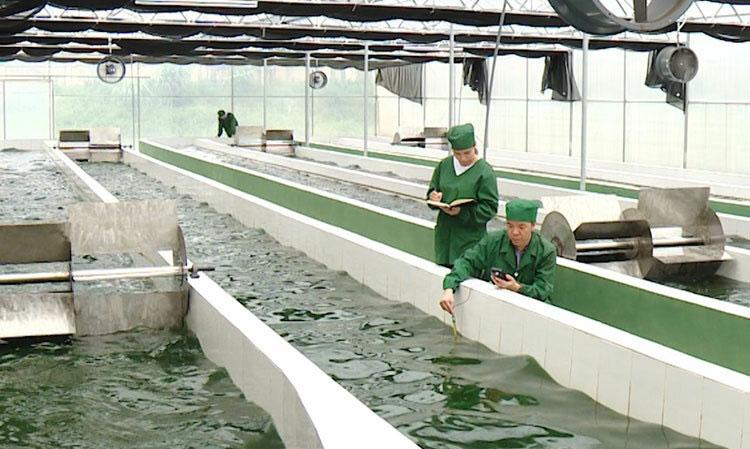 Khu nuôi trồng tảo xoắn Spirulina VNU A03 tại Viện nghiên cứu và ứng dụng công nghệ cao Hòa Lạc.