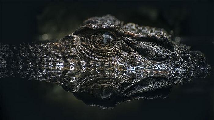 Xương cá sấu xuất hiện tại một khu vực sa mạc cổ của Israel đang thu hút sự chú ý của giới nghiên cứu.