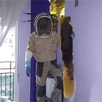 Tổ ong 80.000 con ẩn náu trong tường nhà dân Tây Ban Nha