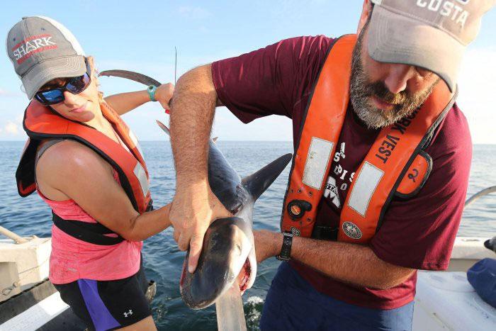 Trong bụng cá mập, đều là chim đến từ đất liền.