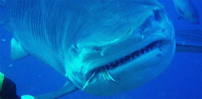 Cá mập là loài ăn tạp.