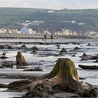 Khu rừng 4.500 năm tuổi phát lộ sau bão mạnh ở Wales