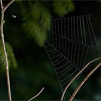Cơ chế bắt mồi rợn người của loài nhện