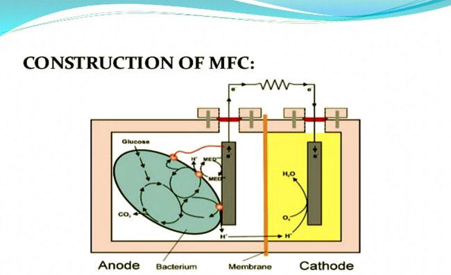 Sơ đồ hoạt động của một MFC truyền thống với vi khuẩn, anode và cathode.