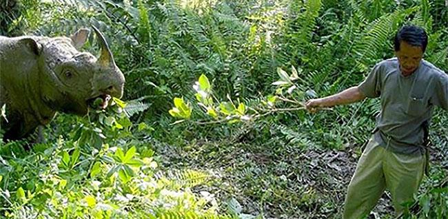 Tam - chú tê giác đực Sumatra cuối cùng của Malaysia đã qua đời.
