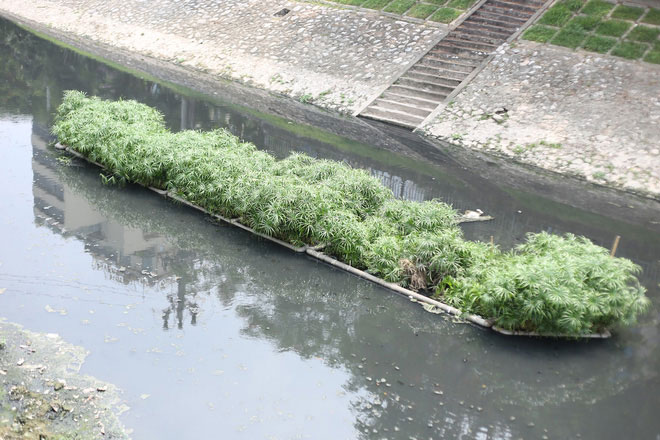 Sông Tô Lịch đã phần nào được làm sạch.