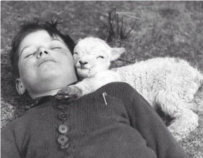 Một chú cừu sơ sinh ngủ ngon lành bên cạnh cậu bé, năm 1940.