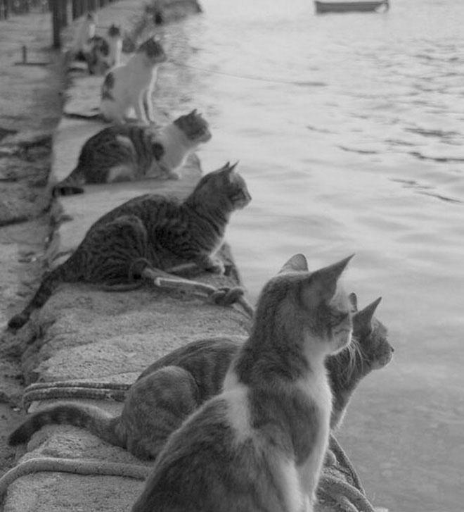 Tụi mèo đang mong chờ các ngư dân trở về (và mang theo cá tươi)!