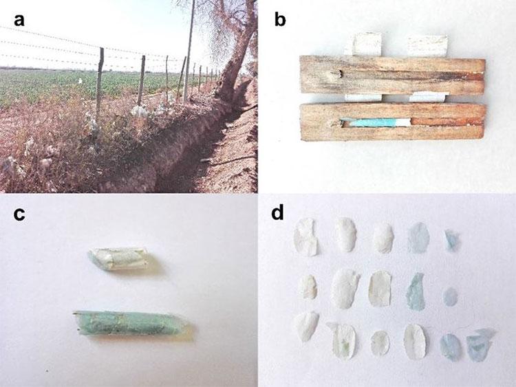 Những vật liệu nhựa mà ong dùng để xây tổ.