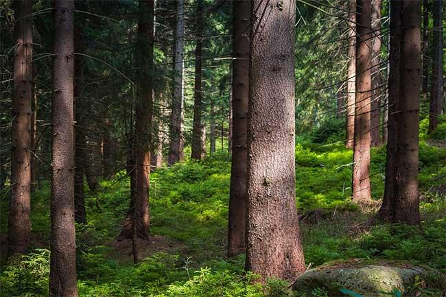 Bản chất gỗ là một vật liệu tổng hợp tự nhiên bao gồm có cellulose, hemicellulose, lignin