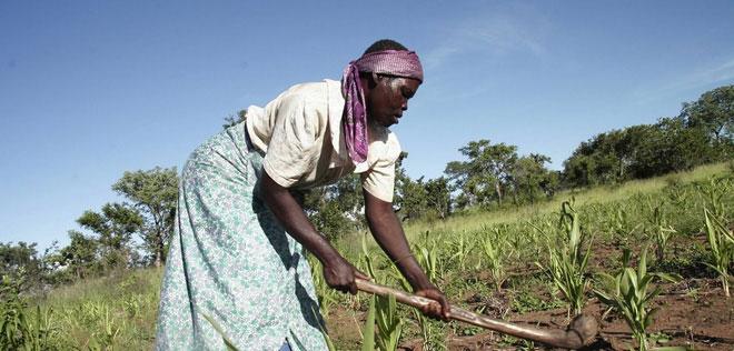 Ở châu Phi, công việc lao động chân tay phải diễn ra hằng ngày hơn.