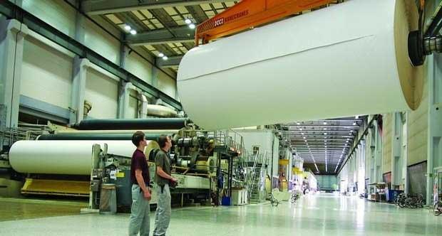 Chúng ta sẽ sản xuất được khoảng 15.277 tờ giấy A4 từ 01 cái cây vân sam.