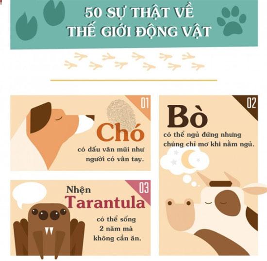 Những sự thật khiến bạn phải đau khổ vì chẳng biết gì về thế giới động vật