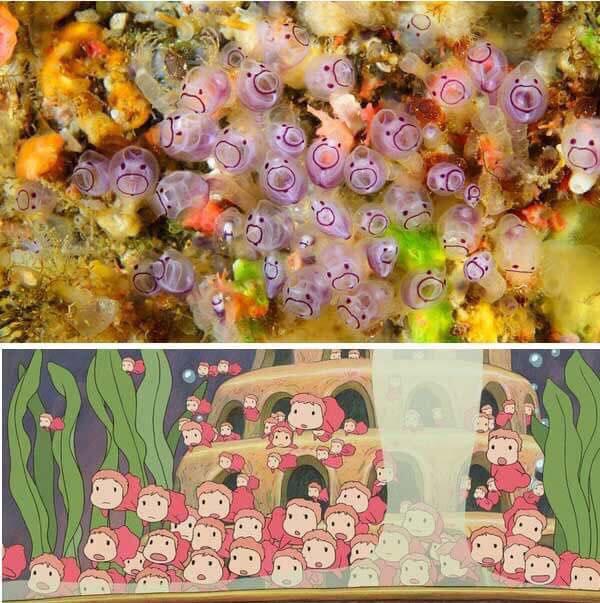 Nguồn cảm hứng cho nhân vật trong phim Ponyo - Cô bé người cá.