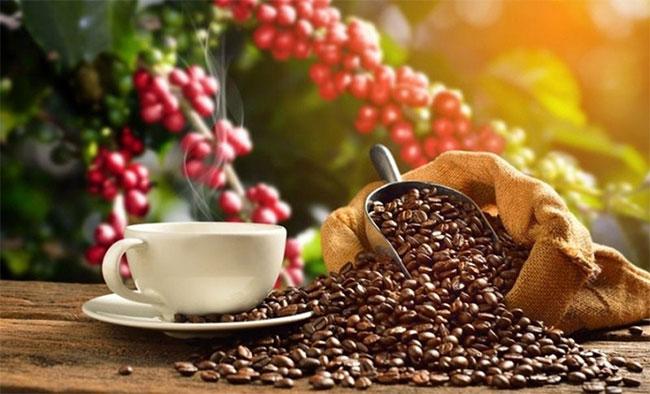 Cà phê có nhiều lợi ích cho sức khỏe