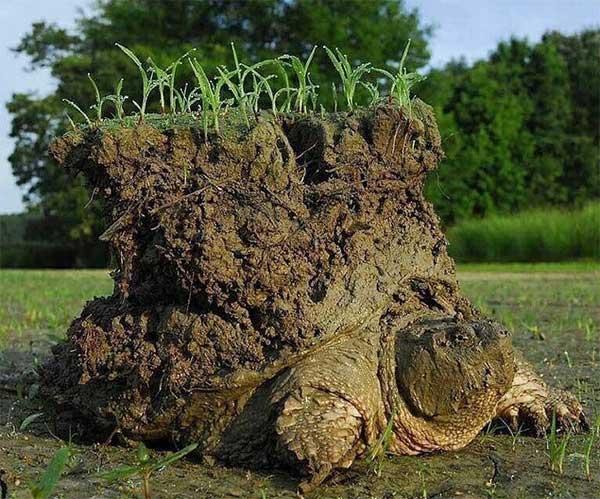 Một chú rùa ngoi lên sau kỳ ngủ đông dài.