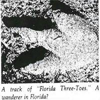 Cú lừa 40 năm: Con chim cánh cụt cao 4,5 mét dạo bước trên bờ biển Florida chỉ là trò chơi khăm