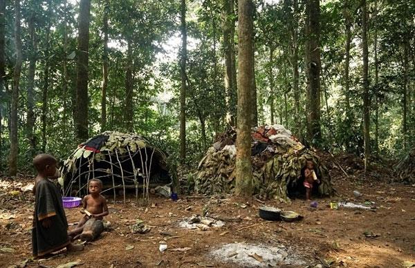 Những đứa trẻ sống trong khu rừng rậm châu Phi chỉ biết làm bạn với cây cỏ